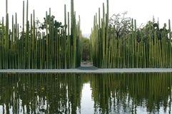 批植物的仙人掌庭院墨西哥 免版税库存照片