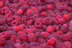 批次莓 免版税图库摄影