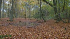 批评在一个五颜六色的秋天森林的照相机 股票视频