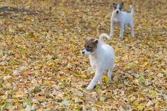 寻找乐趣的两只逗人喜爱的离群小狗 免版税库存照片