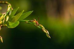 寻找在兰花的大黄蜂食物 免版税库存照片