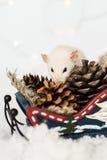 寻找在爬犁的滑稽的鼠礼物在圣诞节装饰 免版税图库摄影