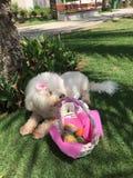 寻找复活节彩蛋的小狗 库存照片