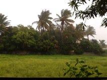 寻找最佳的雨季 库存照片