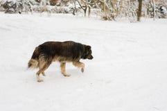寻找每天食物的狗 库存图片