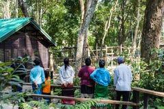 寻找熊的人们在Kouangxi水秋天 老挝luang prabang 库存图片
