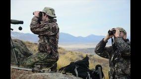 寻找猎获的动物 股票视频