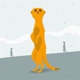 寻找空间的Meerkat 免版税库存图片