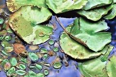 寻找蠕虫的青蛙 库存照片