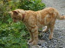 寻找食物的猫 免版税库存图片