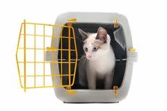 承运人小猫宠物 免版税库存图片