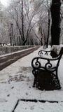 把冷的圣诞节12月雪树霜冬天自然白色公园换下场 免版税图库摄影
