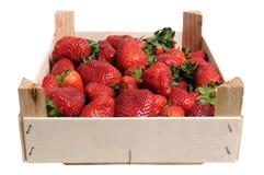 把草莓装箱 免版税库存照片