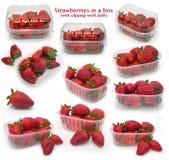 把草莓装箱 库存图片
