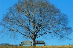把蓝色结构树冬天换下场 免版税库存图片