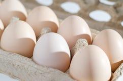 把鸡蛋装箱 库存图片