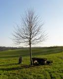 把结构树换下场 免版税库存照片