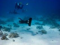 抓住潜水员对尝试的飞翅freediver 免版税库存照片