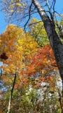 抓住落的叶子 免版税图库摄影