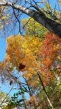 抓住落的叶子 库存照片