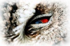 抓住衣领口的Scops猫头鹰 库存图片