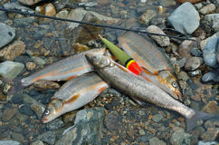 抓住鱼15 图库摄影