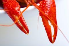 抓小龙虾 免版税库存照片