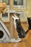 抓岗位的逗人喜爱的猫 库存图片