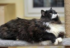 抓岗位的逗人喜爱的猫 免版税库存图片