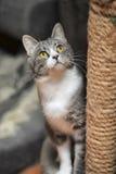 抓岗位的逗人喜爱的猫 图库摄影