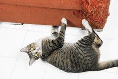 抓橙色织品沙发的小猫 免版税库存照片
