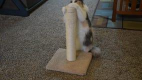 抓的猫,摩擦的头,走开 影视素材