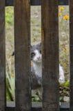 抓篱芭的猫 库存照片