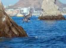 抓鱼的下来鹈鹕飞行和潜水临近Los卡约埃尔考斯/土地在Cabo圣卢卡斯巴哈墨西哥结束 免版税图库摄影