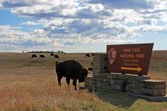 抓头的北美野牛水牛城在风穴国家公园签到南达科他美国黑山  免版税库存图片