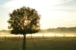投下长的阴影的平安的日出通过树&雾 库存照片
