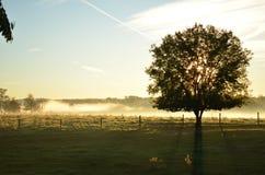 投下长的阴影的平安的日出通过树&雾 库存图片