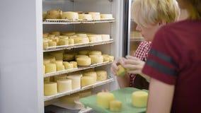 投入煮熟的乳酪的女工在奶酪制造工厂的巨大的工业冰箱朝向 影视素材