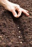投入种子在地面-大豆种子的手 免版税库存图片