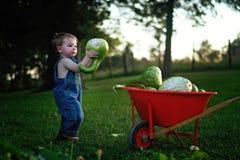 投入金瓜的小孩男孩在独轮车 免版税库存图片