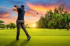 投入高尔夫球在绿色高尔夫球,在太阳集合晚上时间的透镜火光,高尔夫球运动员的高尔夫球运动员击中与俱乐部的高尔夫球球击在路线 免版税库存图片