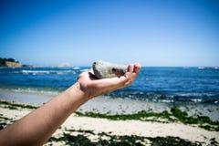 投掷石头的手 免版税库存图片