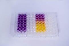 抗氧化分析用试样 库存图片