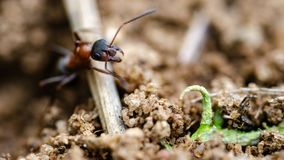抗酸剂 在狂放的昆虫 关闭 免版税库存图片