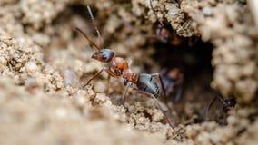 抗酸剂 在狂放的昆虫 关闭 免版税库存照片