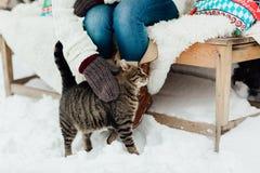 抚摸在雪的妇女的播种的图象一只猫 免版税库存图片
