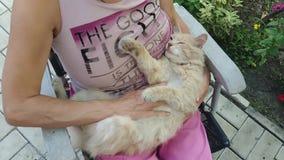 抚摸猫的妇女 影视素材