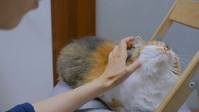 抚摸猫的妇女 股票视频