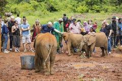 抚摸婴孩大象的游人在肯尼亚,社论 免版税库存照片