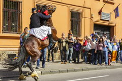 抚养与车手,布拉索夫,罗马尼亚的公马 免版税图库摄影